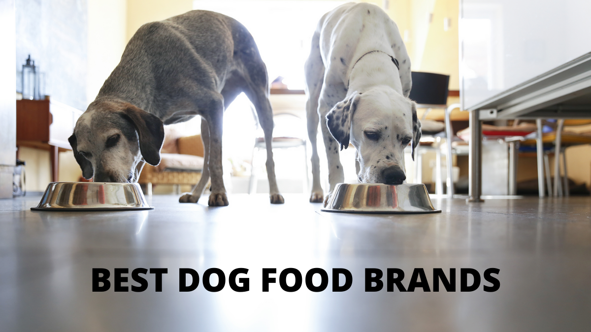 Top Best Dog Food Brands for Your Pawsome Friends